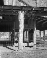 Tree Stump Barn Post (keith_photographer) Tags: parker texas unitedstatesofamerica mamiya rb67 pro professional film trix400 barn bw monochrome