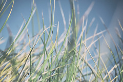 Feel the Wind (kristianoosterveen) Tags: beach zand strand foot footprint grain zandkorrel wind shape sea zee vorm gevormd egmond aan noord holland noordholland north the netherlands nederland kust coast coastline kustlijn dune dunes duin duinen blowing blow waaien weggewaaid gewaaid blew away sand grass dunegrass duingras gras grond ground earth aarde perspective kikkerperspectief perspectief frog frogs frogperspectief kikker groen blauw green blue