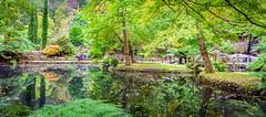 Pre Autumn reflections (Scottmh) Tags: 2028 alfred anzac australia autumn d7100 dandenong day garden melbourne nicholas nikon ranges victoria