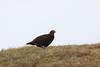 IMG_1991 (monika.carrie) Tags: monikacarrie wildlife scotland glenesk