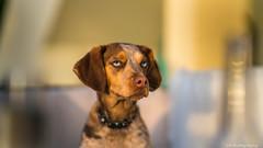 Sky (C.A.Photogenics) Tags: colour dog portugal sony a7rii love cute bestfriend contrast boka eye holiday pet beautiful stunning