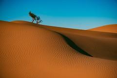 Grace (Tom Levold (www.levold.de/photosphere)) Tags: desert fuji marokko morocco wüste xt2 xf18135mm landscape dünen landschaft m'hamid sahara sand dunes baum tree zagora