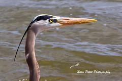 IMG_5141 (nitinpatel2) Tags: bird nitinpatel