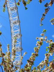 London Eye (StrongGrace Photography) Tags: nikoncoolpixp610 grosbritannien britischeinseln england london greatbritain britishisles londoneye ferriswheel riesenrad unitedkingdom sky himmel tree baum blüten blossoms southbank riversidewalk stronggracephotography ©ninahesse