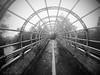 Puente ciclopista (puntokom) Tags: puente arquitectura chapultepec méxico cdmx neblina ciclopista blancoynegro blackwhite monocromático monochrome airelibre