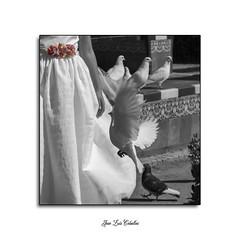 Elena (Jose Luis Fotografía) Tags: europa españa andalucía sevilla plaza de barrio santa cruz paiasaje retrato femenino mujer comunión monumentos palomas parque estanque agua flores