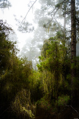 Mystical forest (Rico the noob) Tags: dof d850 landscape nature mist outdoor 2470mmf28 trees tree forest published sky fog teneriffa 2018 2470mm tenerife