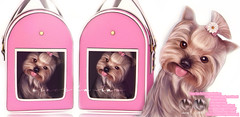More Yorkies =^.^= (♥ Stasey Oller ♥ [Black Bantam]) Tags: black bantam yorkies yorkie equal10 doggy carrier gacha yorkshire terrier stasey oller second life pink acid