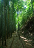 Bamboo Shower (Yohsuke_NIKON_Japan) Tags: bamboo nature green spring kurayoshi tottori sanin japan westjapan rail railway 廃線 倉吉線 鳥取 倉吉 山陰 関金 泰久寺 sekigane