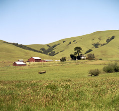 Red Hill Ranch (Scott Holcomb) Tags: dairycountry westmarin marinagriculturallandtrust california kowasix kowalenss135150mmlens kowal39•3cuvø67filter cinestill50dfilm mediumformat 6x6 120film epsonperfectionv600photo photoshopdigitalization