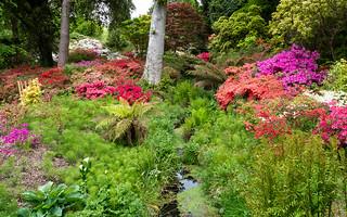 Colour in Exbury Gardens