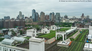 Brooklyn Grange Rooftop Farm (20180522-DSC06597-Edit)