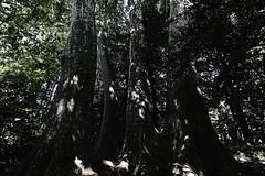 sdqH_180524_B (clavius_tma-1) Tags: sd quattro h sdqh sigma 1224mm f4 dg 1224mmf4dghsm art 新宿 shinjuku 東京 tokyo 新宿御苑 park tree