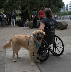Man's Best Friend (Scott 97006) Tags: dog friend wheelchair man cute