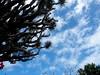 Nubes sobre el drago (nora4santamaria) Tags: islascanarias drago nubes martesdenubes nwn lovelyclouds