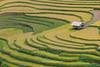 _J5K0753.0617.Khao Mang.Mù Cang Chải.Yên Bái. (hoanglongphoto) Tags: landscape harvest house vietnam yênbái mùcangchải phongcảnh ruộngbậcthang nhà lúachín mùagặt canon canonzoomlensef70200mm128lisiiusm asia asian châuá đôngnamá ngôinhà field paddyfield cornfield cánhđồnglúa ruộnglúa đồnglúa abstract curve đườngcong scenery vietnamlandscape vietnamscenery vietnamscene terraedfields terracedfieldsinvietnam hillside terraces canoneos1dsmarkiii sườnđồi khaomang
