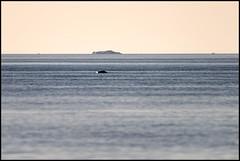 Isberget utanför Fäboda (14 maj 2018) (Jonas Thomén) Tags: isberg iceberg sea hav havet rock sten horizon horisont vatten water ice is stacked