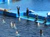 Oceanografic Valencia (Elysia in Wonderland) Tags: oceanografic aquarium valencia holiday elysia lucy 2018 mum spain spanish vacation fish dolphin show