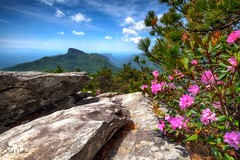 Hawksbill Mountain Beauty (Reid Northrup) Tags: rrs nature clouds forest hawksbillmountain landscape linvillegorge mountain nikon northcarolina rhododendrons rocks trees tablerock reidnorthrup