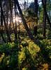 Into the woods (Vest der ute) Tags: xt2 norway rogaland tuastad woodland landscape trees sun sunstar forest tree fav25