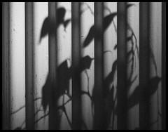 DL XIX (*TimeBeacon*) Tags: minimal minimalistic minimalism shadows wall monochrome lines lightshadow bw blackandwhite abstract
