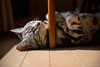_NCL4516-Edit (chitoroid) Tags: nikond750 afsnikkor2470mmf28ged japan hokkaido sapporo cat