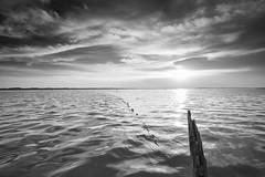 Shine (chibitomu) Tags: canon 5dmarkiii canonef1635mmf4lisusm clouds lake light landscape nature sunset water wave kasumigaura namegatashi ibaraki japan 輝き 霞ヶ浦 行方市 茨城県 日本 chibitomu