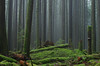 Refreshing Mist (Kristian Francke) Tags: bc canada british columbia nature landscape landscapephotography outdoors pentax forest green tree trees wilderness woods