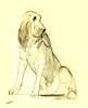 Dog-01 (Marianne Cornelissen-Kuyt) Tags: tekening drawing dessin zeichnung lápiz crayon pencil hond dog chien hund perro cane trouw zitten sit loyal zit schets