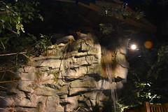 Indoor Waterfall (Adventurer Dustin Holmes) Tags: 2018 wondersofwildlife indoorwaterfall springfieldmo springfieldmissouri ozarks basspro outdoorworld bassproshops