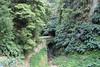 Ilha de São Miguel - Açores (jONNAS23) Tags: portugal açores azores arvore tree verde green natureza nature tunel tunnel