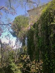 Mauve (Gilbert-Noël Sfeir Mont-Liban) Tags: mauveauxyeuxdamour mauve malva cascade fleurs flowers blumen verdure greenery haus maison house kesserwan montliban liban mountlebanon lebanon branches grappes grappoli
