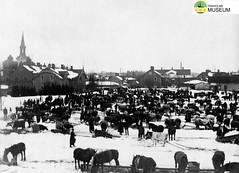 tm_7446 - Nya Torget, Tidaholm (Tidaholms Museum) Tags: svartvit positiv tidaholm exteriör bostadshus torg kor hästar marknad