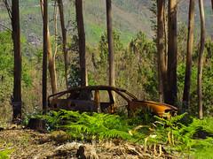 Destroços (JoséAMoreira) Tags: mata woods car green trees portugal eucaliptos forest stone landscape