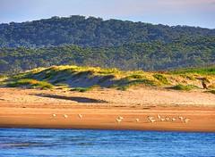 View across the lake VIII (elphweb) Tags: hdr highdynamicrange nsw australia beach water lake sea ocean sand sandy