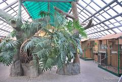 Екзотаріум Ботанічного саду імені Гришка, Київ InterNetri  Ukraine 25