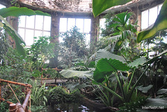 Екзотаріум Ботанічного саду імені Гришка, Київ InterNetri  Ukraine 23