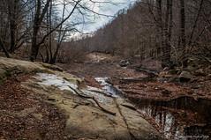 Llegando al pantano (SantiMB.Photos) Tags: 2blog 2tumblr 2ig río river santafe pantano march dam sequía drought montseny bosque forest invierno winter geo:lat=4177112600 geo:lon=246752345 geotagged riellsriellsiviabrea cataluna españa esp