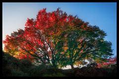 Rainbow Tree (Howard L.) Tags: britishcolumbia canada canonef1635mmf4lisusm queenelizabethpark sonya7rii trees vancouver sunlight reflection rainbow nature rainbowtree art frame