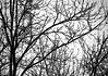 March Snow (pjpink) Tags: snow snowcovered snowy weather ice rvasnow rvasnow2018 blackandwhite bw monochrome northside rva richmond virginia winter march 2018 pjpink 2catswithcameras