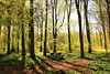 The Forest Is Awake ..... (acwills2014) Tags: shadows spring freshness green colour landscape light table picnic