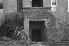 Hedgehogs love the ivy (Other dreams) Tags: basement entry bw hp5 entrance stairs rural neglected ivy backyard hedgehogsvcats moderndayliving pomerania poland april 2018