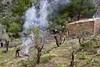 Pruning the olive trees (@WineAlchemy1) Tags: mallorca majorca spain trees balearics railway ferrocarrildesóller agriculture serradetramuntana pruning olives fire terraces mountains