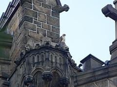 Madeleine - 9279 (rbs10025) Tags: redtailedhawk buteojamaicensis bird morningsideheights manhattan nyc cathedraloftjohnthedivine