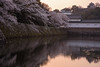 彦根城8・Hikone Castle (anglo10) Tags: 彦根市 滋賀県 japan 彦根城 城 castle 桜 cherry 夕景 sunset