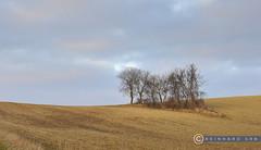 Niederösterreich Weinviertel Harmannsdorf_DSC1119A (reinhard_srb) Tags: niederösterreich weinviertel harmannsdorf landwirtschaft bauer feld acker erde agrar scholle hügel landschaft bäume kahl gruppe gestrüpp