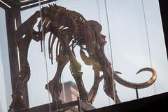 INDUSTRIEMAGNIFIQUE MAMMUTHUS -106 (MMARCZYK) Tags: france grand est grandest alsace strasbourg 67 lindustrie magnifique art mammouth mammuthus volantes soprema