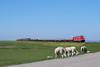 P1550226 (Lumixfan68) Tags: eisenbahn züge autozüge syltshuttle db deutsche bahn bombardier traxx mehrmotorloks multiengine dieselloks loks baureihe 245