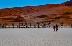 Namibie - Dead Vlei : Vers l'infini [Explored] (Hervé Marchand) Tags: 2018 namibie deadvlei desert white sand tree accacia bigdaddy inexplore
