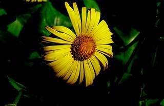 Żółty kwiat.